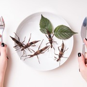 Plate full of insects in insect to eat restaurant